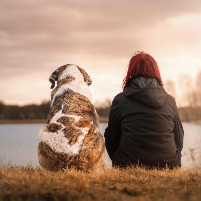 Let op uw huisdier en voorkom een hoop